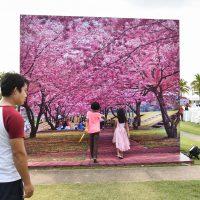 Photo Corner Sakura